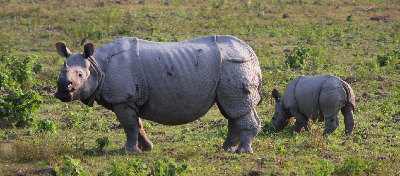 India and Nepal tour slide what do rhinos eat