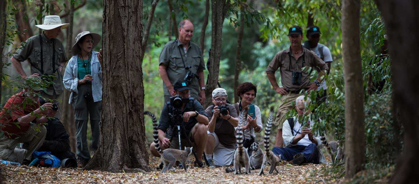 Madagascar travel photo of Apex Expeditions travelers with Ring-tailed Lemurs