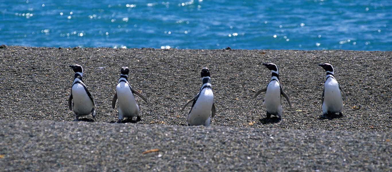 Patagonia adventure tour slide of penguin habitat