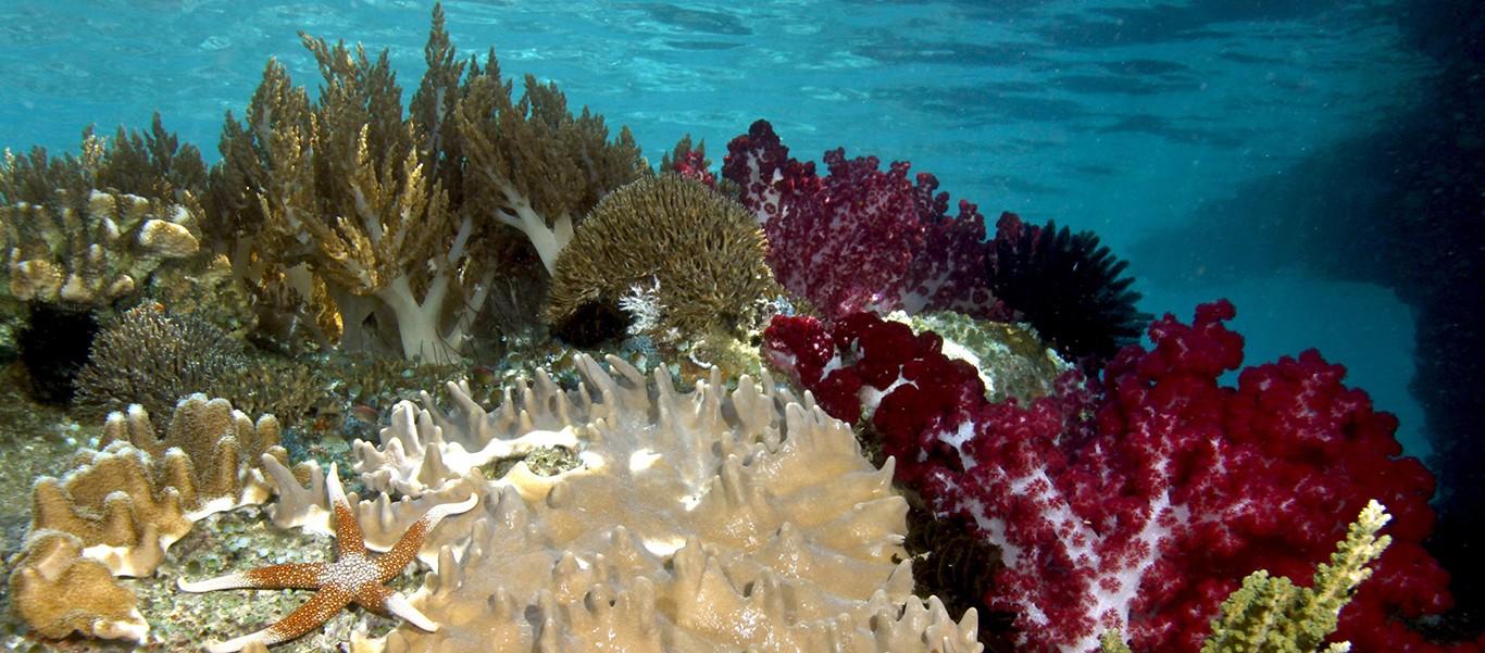Indonesia diving tour image of soft corals in Raja Ampat