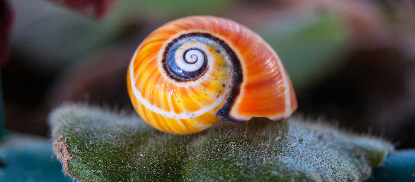 Cuba tours photo features a snail