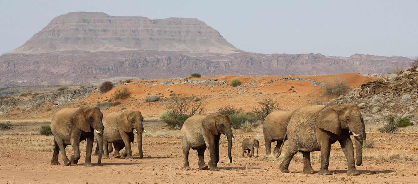 Namibia adventure tour slide shows desert elephants looking for the Kunene river