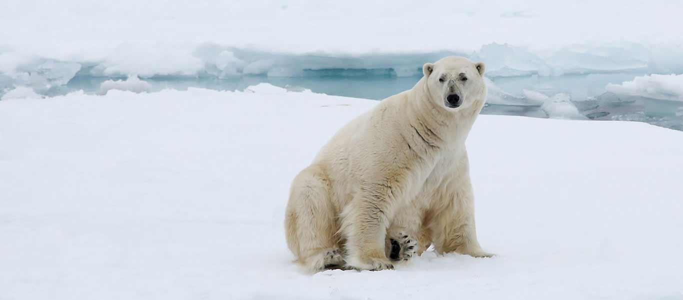 Greenland tour slide shows Baffin Island polar bear habitat