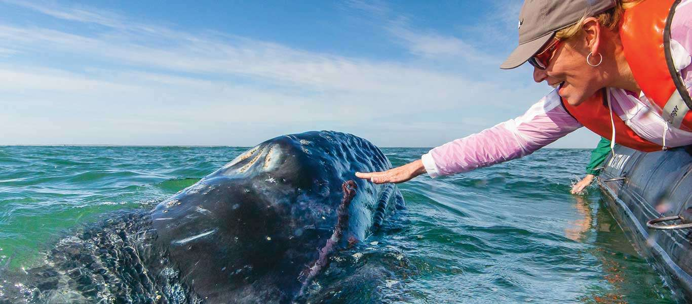 Baja whale watching cruise image of California Gray Whale encounter