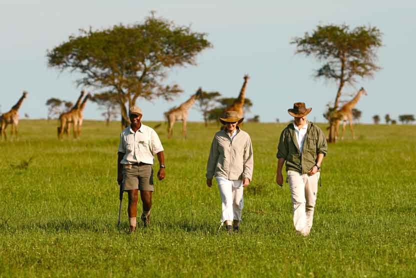 Serengeti wildebeest migration photo of walking safari