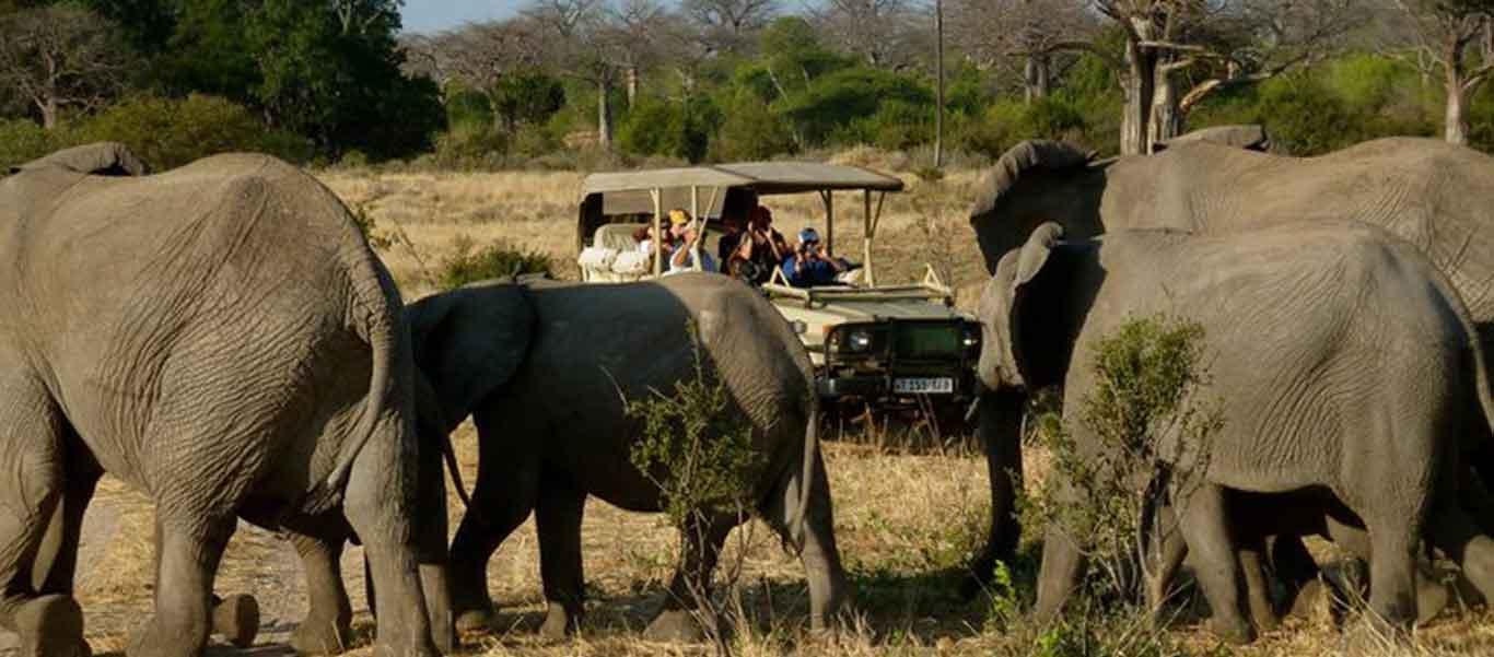 Southern Tanzania safari photo of African Elephants on game drive