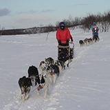 Dog mushing on Norway adventure tour