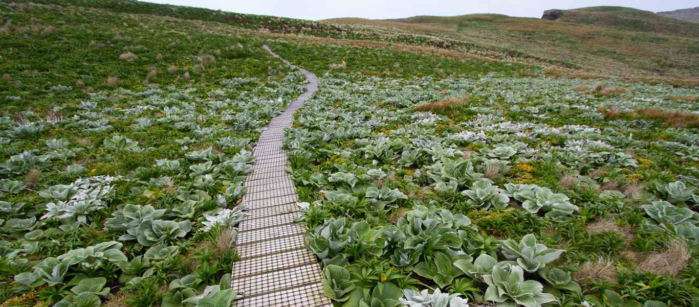 Sub-Antarctic Islands cruises slide of boardwalk on Campbell Island