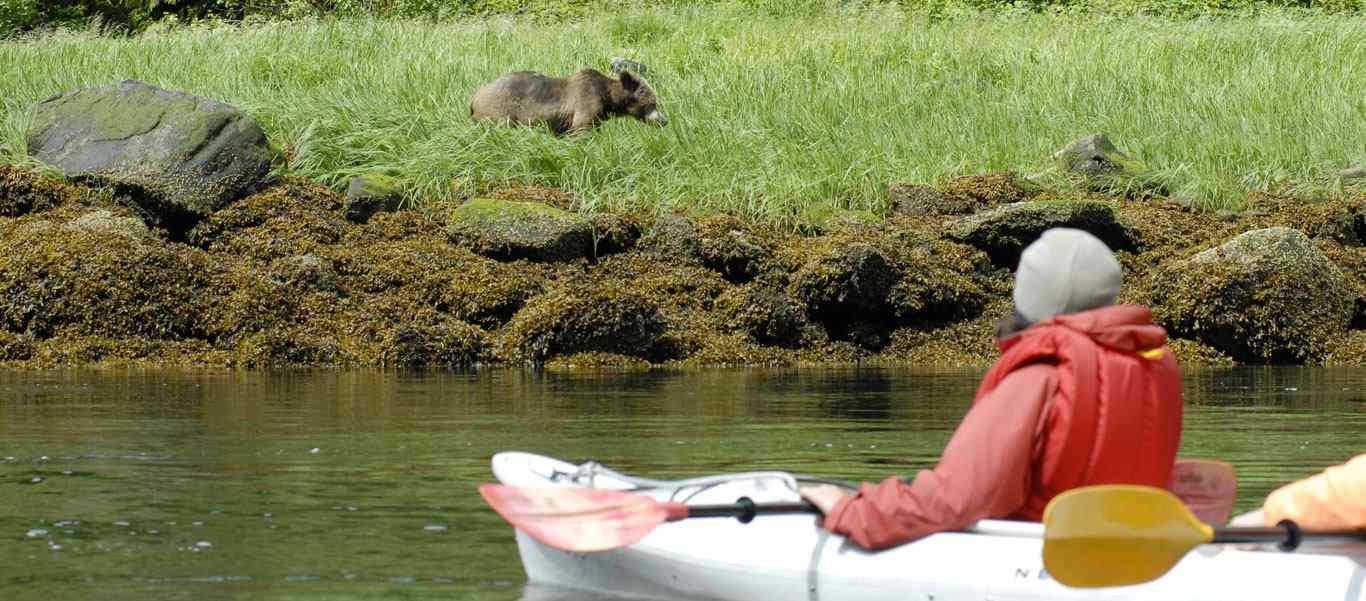 Spirit Bears Canada tour photo of a bear and kayaker
