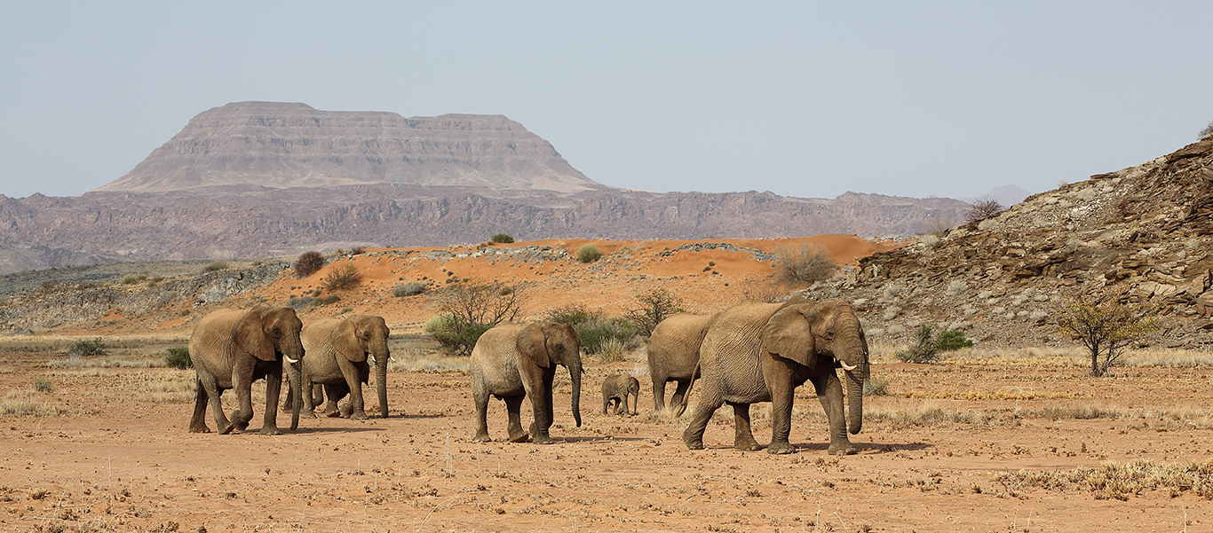 Namibia adventure tour slide shows desert elephants looking for the Kunene river