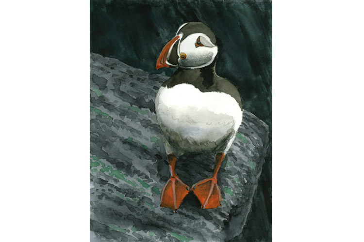 Painting by Kevin Clement of an Atlantic puffin