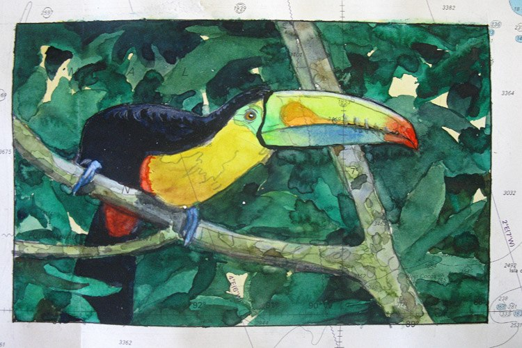 Painting by Kevin Clement of Toucan bird