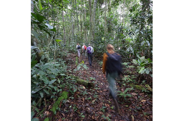 Congo gorilla trekking slide shows travelers hiking through forest