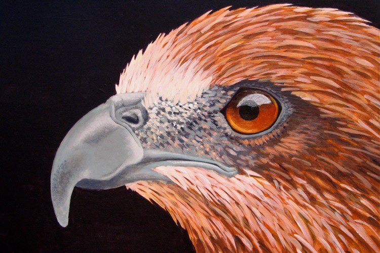 Painting by Kevin Clement shows a whistling kite