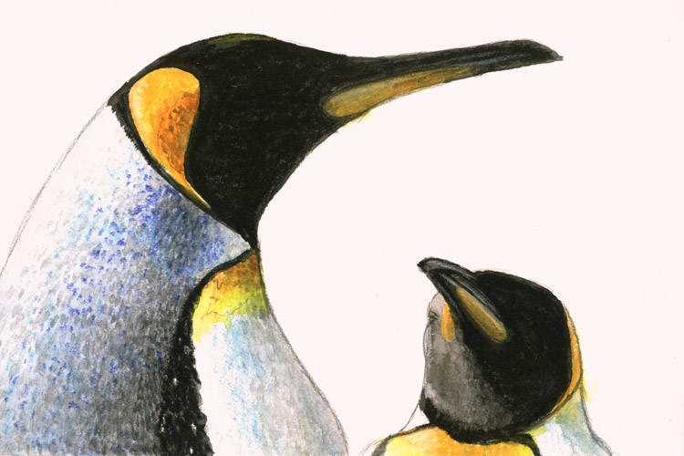 Artwork by Kevin Clement of King Penguins in St Andrews Bay of South Georgia Island