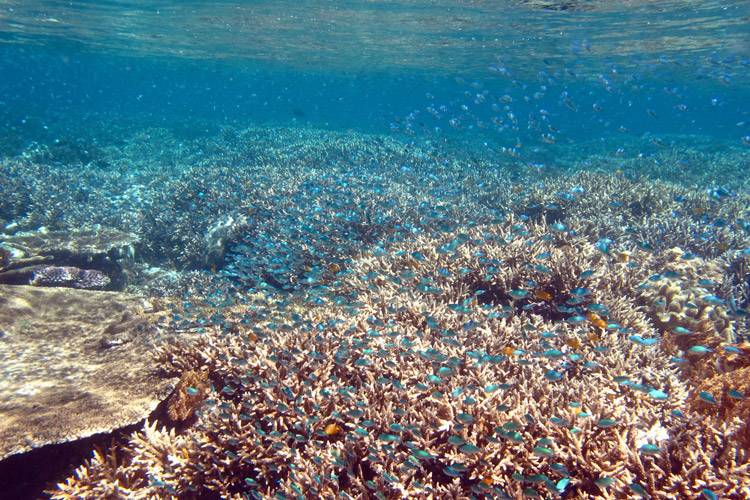 Raja Ampat diving tour featuring clouds of damsels