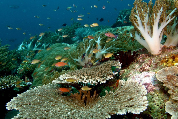 Raja Ampat diving adventure photo showing a coral reef and fish