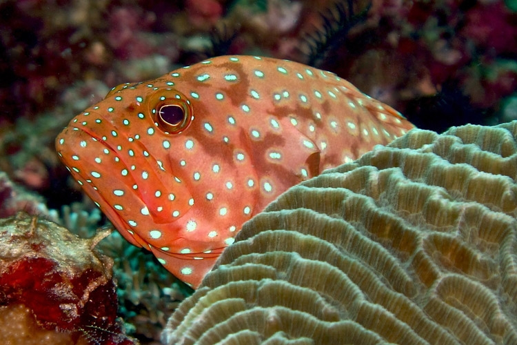 Raja Ampat diving tour slide shows orange fish