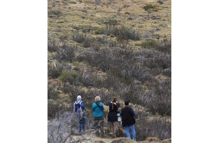 Patagonia wildlife tour image shows Apex Expeditions travelers searching for pumas