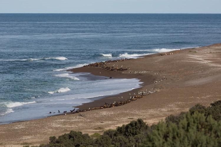 Patagonia tour image showing Punta Norte on Peninsula Valdés