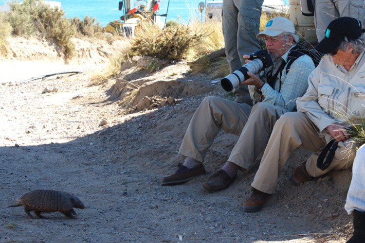 Patagonia wildlife tour photo of Peter Harrison photographing Hairy Armadillo