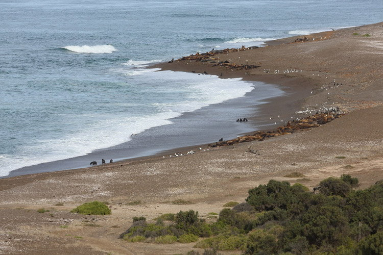 Patagonia tour image shows Punta Norte and sea lions
