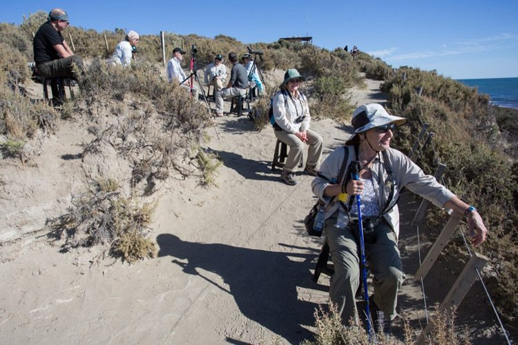 Patagonia wildlife expedition image showing Apex Expeditions travelers at Punta Norte