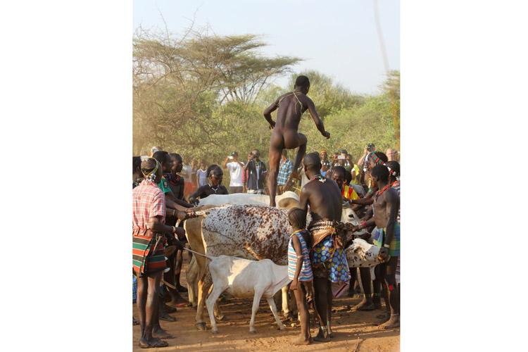 Ethiopia tours slide showing bull jumping near Turmi