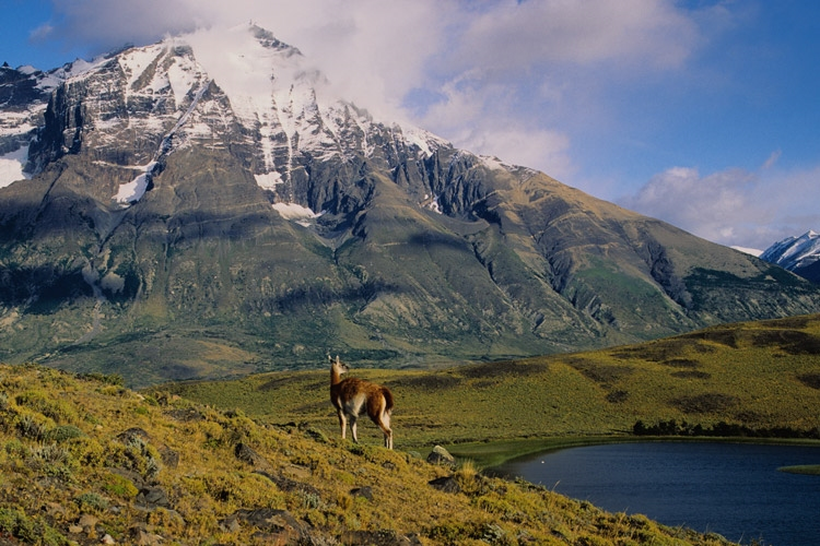 Patagonia tours photo of guanaco habitat