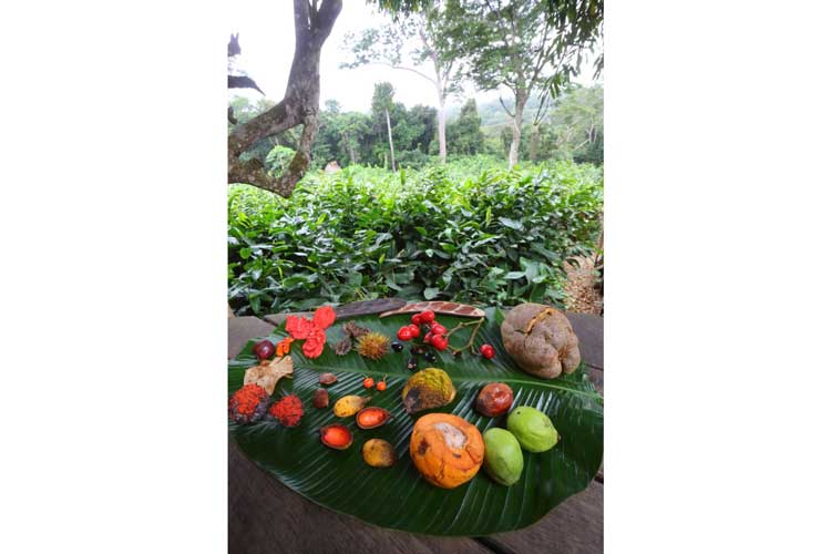 Congo gorilla safari image showing various forest fruits