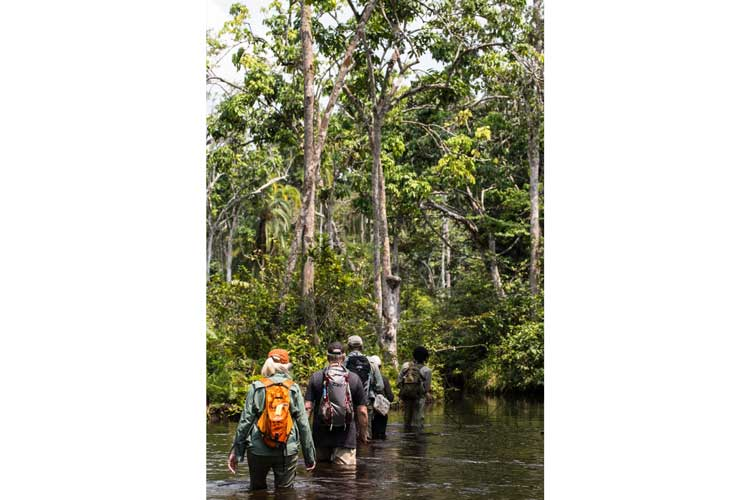 Congo safaris image of group walking through the swamp near Lango Camp