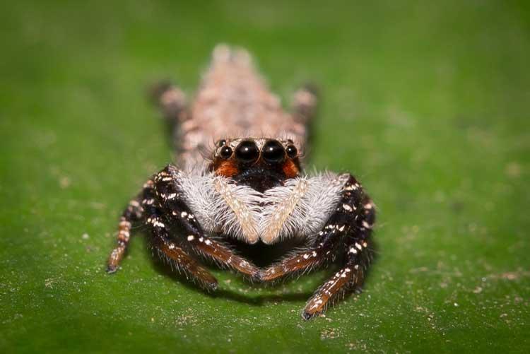 Congo gorilla safari photo of a spider