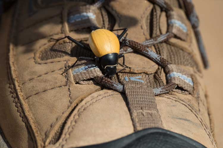 Namibia tour image of Toktokkie beetle on Apex Expeditions travelers shoe