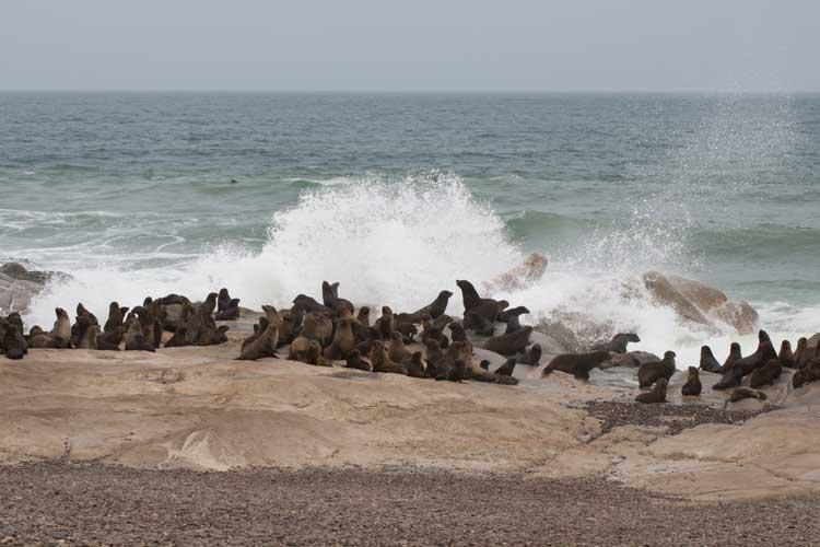 Namibia safari photo of fur seal colony at skeleton coast