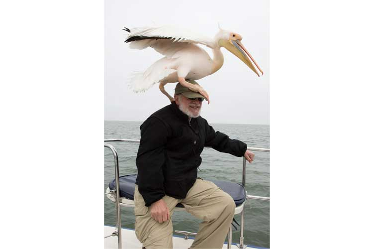 Namibia expedition tour photo of great white pelican sitting on Apex Expeditions travelers head at Walvis Bay