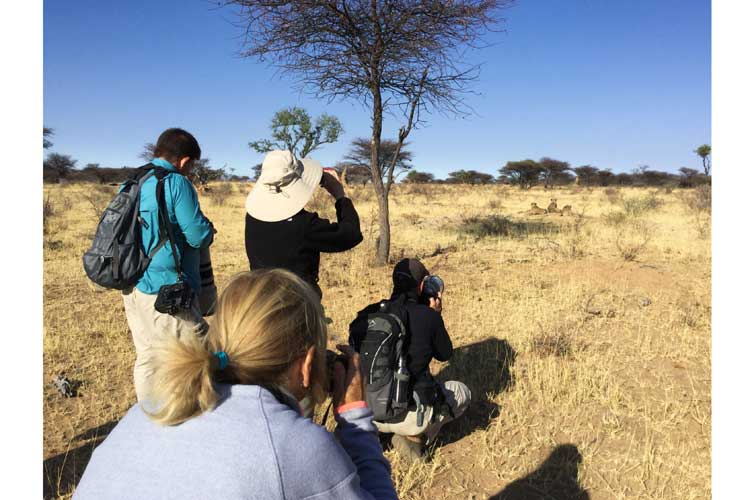 Namibia wildlife safari image of Apex Expeditions travelers photographing resting cheetahs