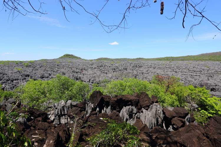 Madagascar expedition image of tsingy limestone forest