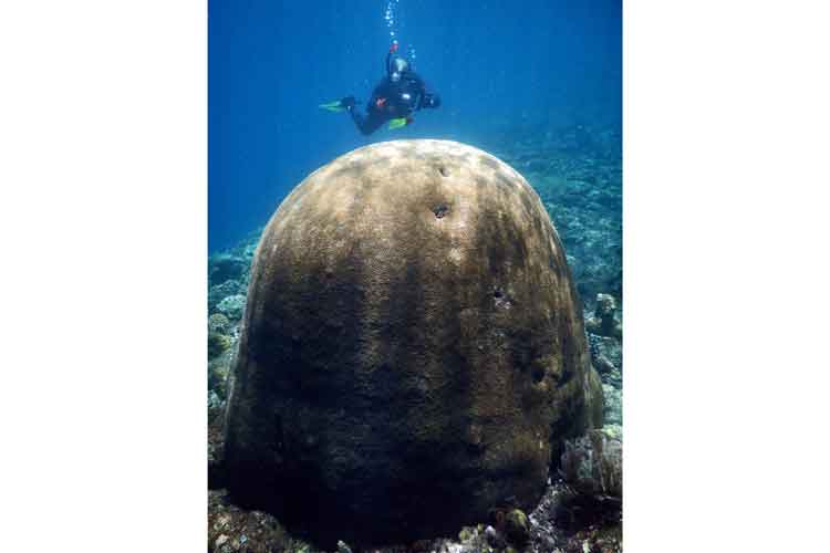 Raja Ampat diving adventure image showing snorkeler with giant brain coral colony
