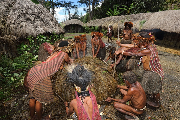 west papua people image of dani tribe securing pig roast oven