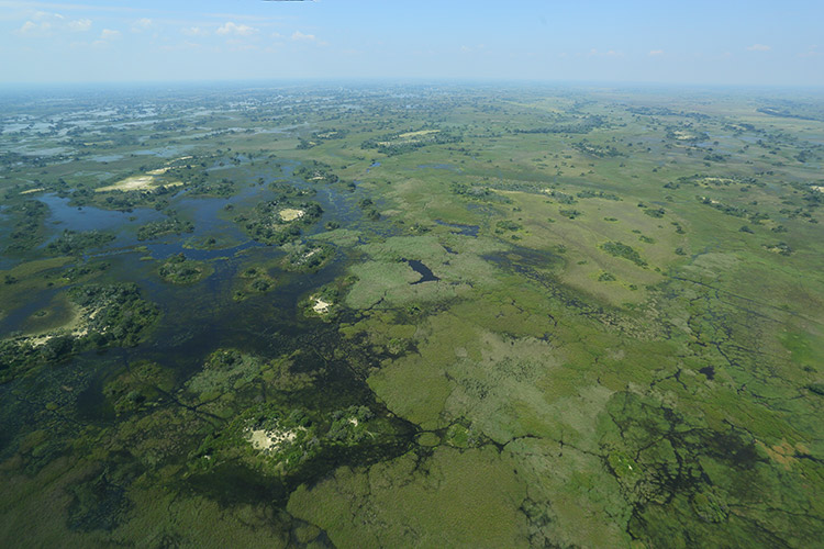 botswana travel picture of aerial Okavango Delta in green season