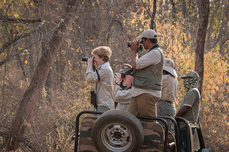 India wildlife safari game viewing at Kanha National Park