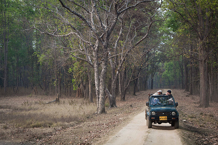 India wildlife safari game viewing