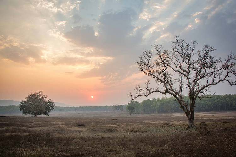 Sunrise at Kanha seen on India wildlife safari