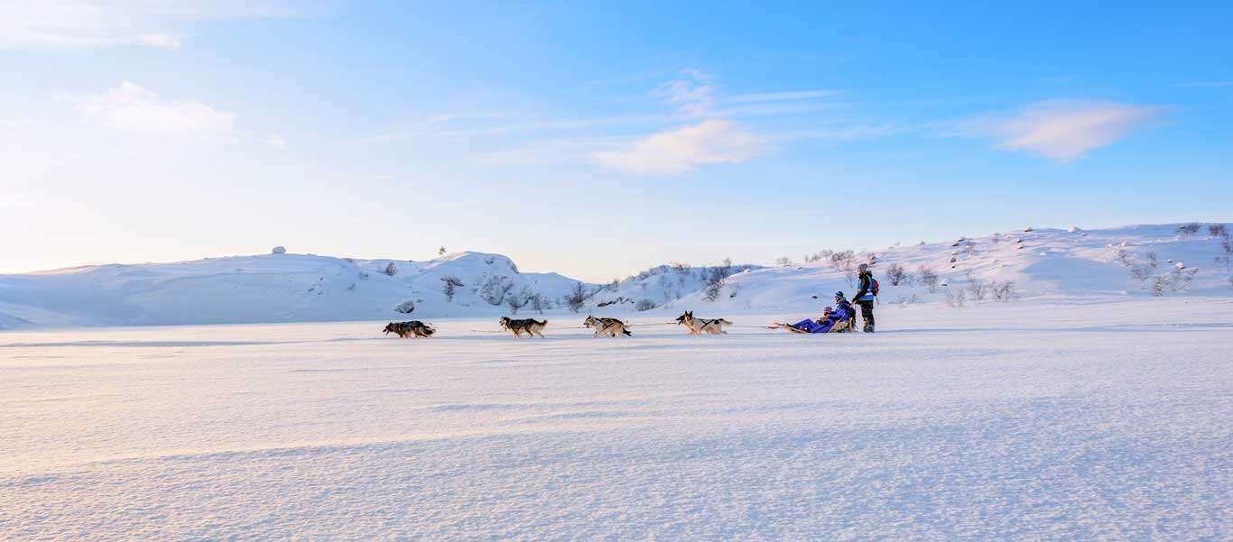 Norway Adventure tour image of dog sledding