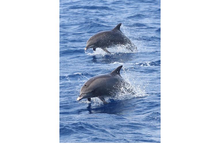 Sri Lanka wildlife dolphins