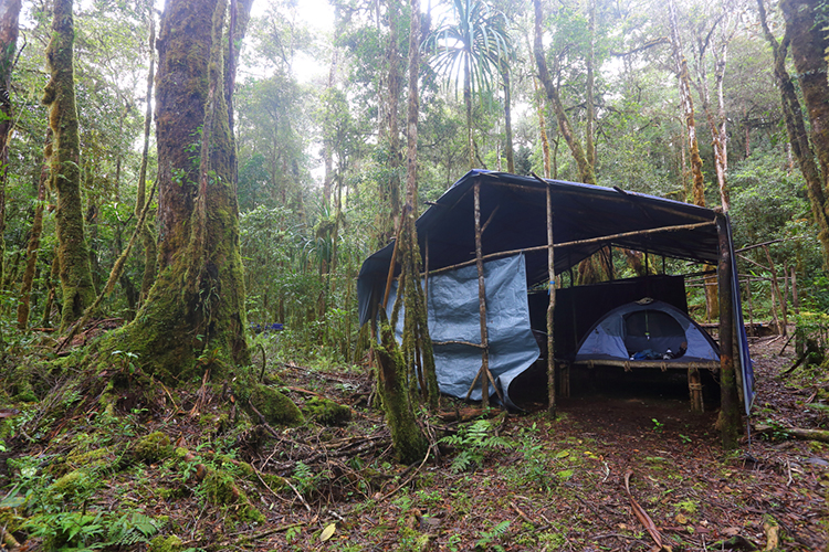 Tent at Arfak Mountains in western New Guinea on 9000 bird quest