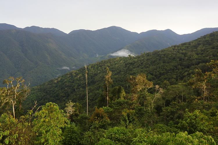 Arfak Mountains scenery on Vogelkop Peninsula in Western New Guinea seen on 9000 bird quest