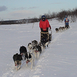 Dog mushing on Norway adventure tour