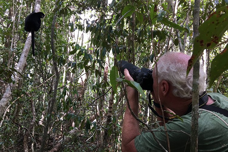Traveler photographing Perrier's Sifaka in Madagascar