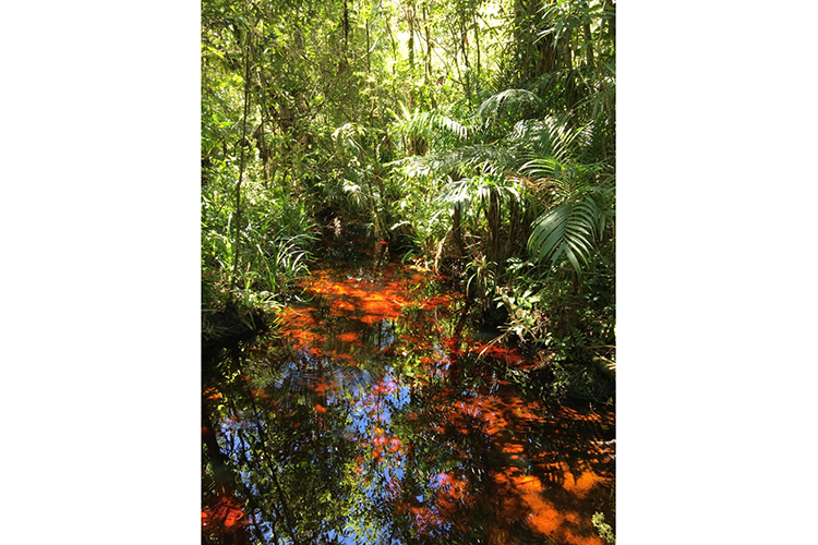 Volta Velha Restinga woodland Brazil seen on 9000 bird quest